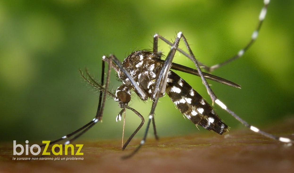 Lotta alle zanzare con la bio disinfestazione